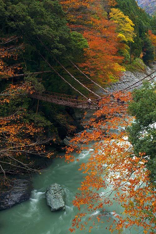 日本自由行·德岛县的葛藤吊桥(德岛县上海事务所供图)