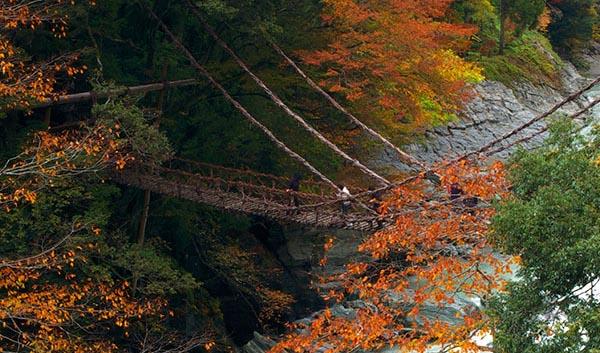 【日本自由行攻略】德岛县,闪耀在濑户内海的一颗明珠