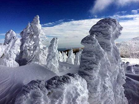 宫城县冰雪公园·澄川Snow Park内的树冰奇观