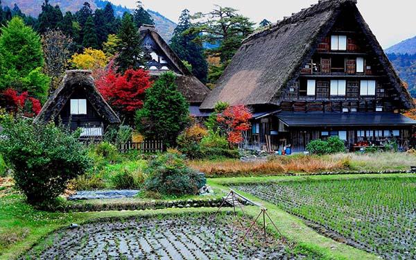 日本旅游地�_【日本旅游】探访白川乡传统建筑的魅力