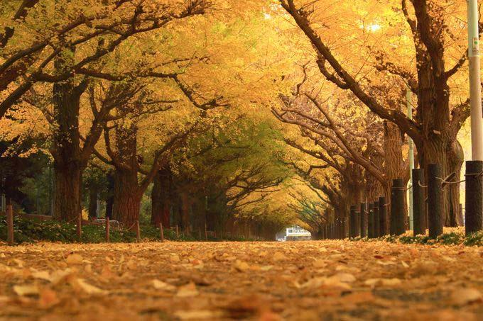日本旅游景点:撒手人寰之前必须去一次的日本