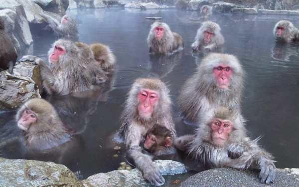 """世界唯一一处猴子泡温泉的公园·长野县""""地狱谷"""