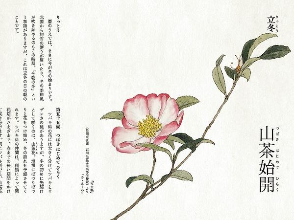 立冬手绘花卉图