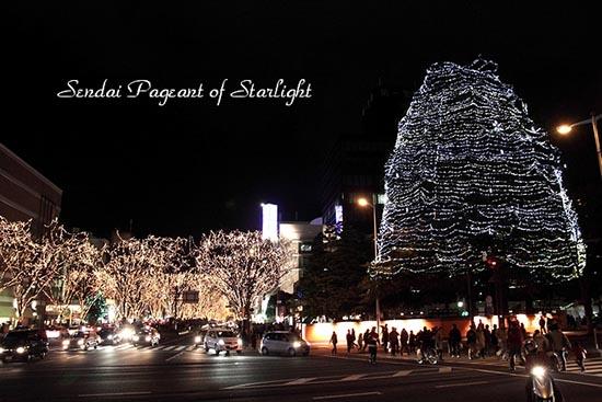大街上的树木上被无数的彩灯装饰得如梦如幻