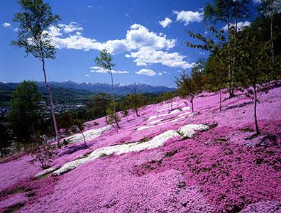 北海道旅游概况