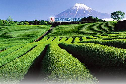 访日旅游外国游客对日本文化的关心与需求增强,日本茶文化也是其中一个支流。为满足这些市场需求,将茶文化作为吸引游客到地方去的旅游资源,各产茶大县开始对茶文化展开推广与宣传。