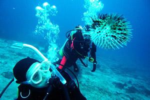 日本潜水俱乐部