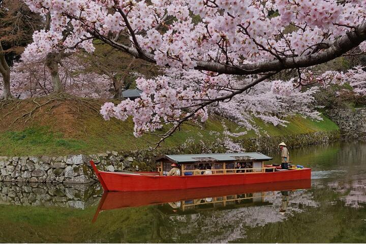 乘坐屋形船欣赏约1200棵樱花树彦根城护城河游览 第三条路线是欣赏国宝彦根城和樱花的彦根城护城河游览。彦根城是赏樱名地,春季会有大约1200棵樱花树同时盛开,尽显春色烂漫。 而游览护城河的屋形船是根据江户时代的绘图和以前的照片真实再现的。游客可以用不同于平时的视线来一饱樱花群木和彦根城交织而成的景色。另外,夜游时也可以从船上观看用灯光装点的美丽樱花树。