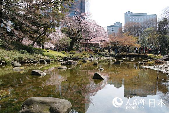 小石川后乐园赏樱