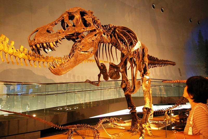 2016年福井县住宿游客增势位居第二位恐龙汇聚人气