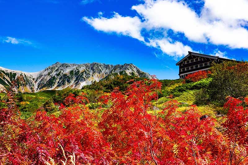 「立山紅葉」的圖片搜尋結果