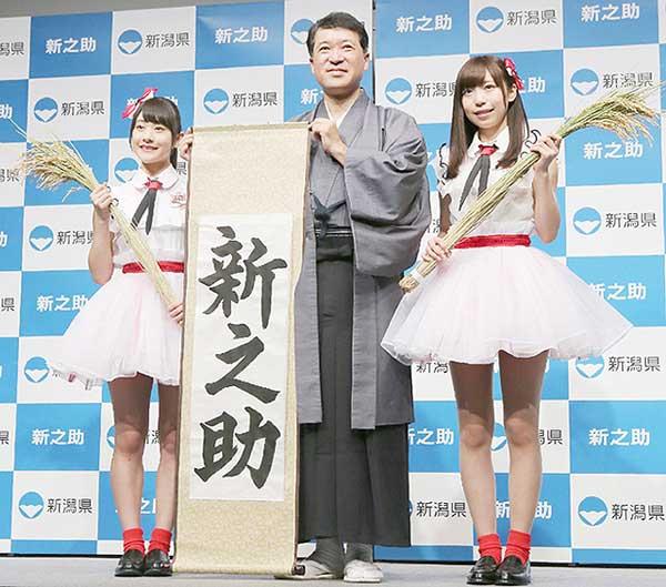 """日本新潟新品种大米""""新之助""""将上市 市场售价仅次于鱼沼越光米"""