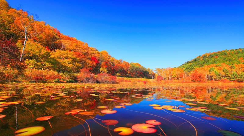 日本滑雪胜地长野志贺高原迎来红叶观赏期