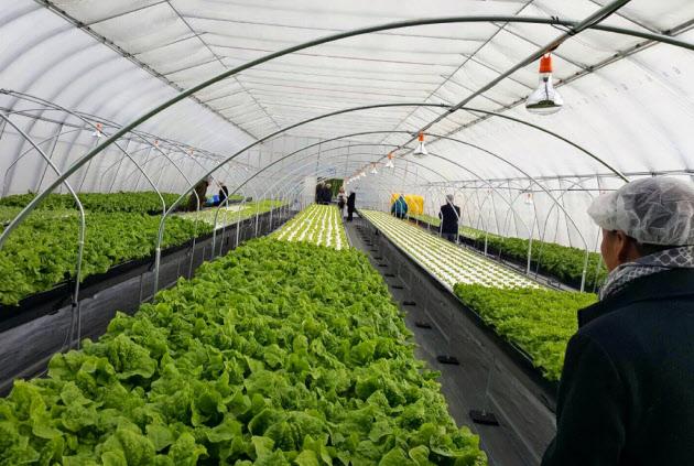 日本宫城物流公司Senkon在大连建设农产品基地 向酒店和富裕家庭供应蔬菜