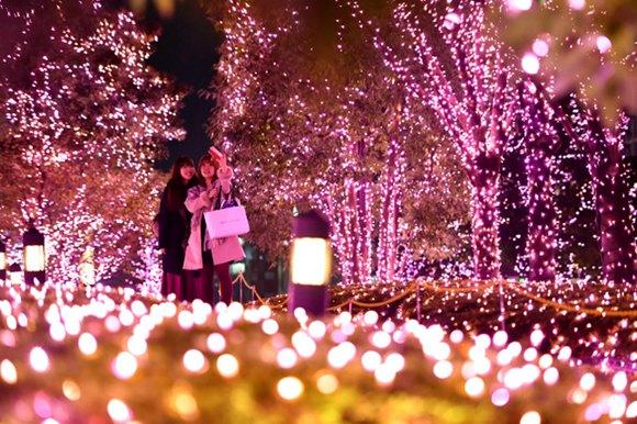 东京新宿亮起樱花色节日彩灯 由30万个led灯组成