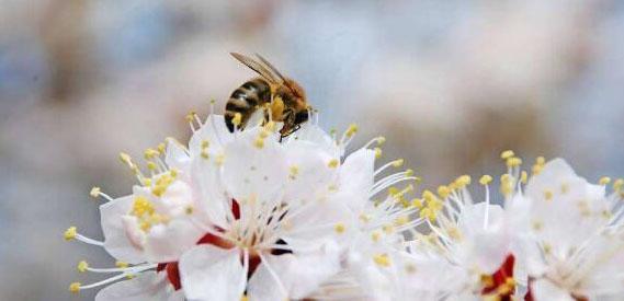 日本企业开发的新花粉症疫苗将迎来最终试验
