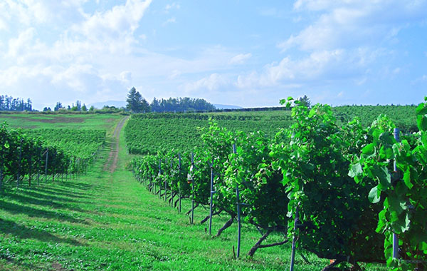 日本首次對外資購買農地進行調查 2017年僅有兩宗農地交易且都合法