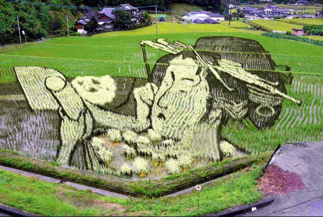 为吸引游客 日本熊本推出巨大水田画