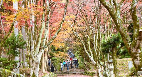 疫情下的红叶季 日本3连休期间人员流动出现不平衡