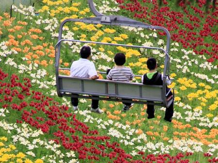 枥木县的百合乐园。源自网站截图
